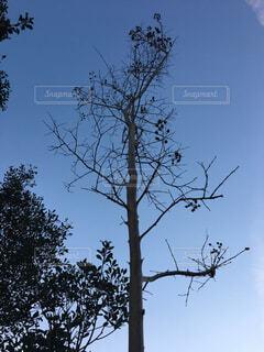 庭木の写真・画像素材[1608922]