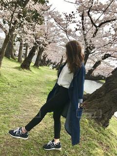 ロングジャケットの女性と桜の写真・画像素材[779468]