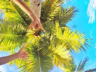 ヤシの木と手の写真・画像素材[793550]