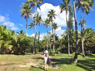ヤシの木の横に立っている人の写真・画像素材[793552]