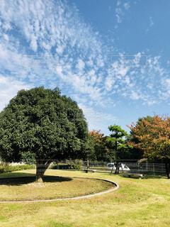 背景の木と大規模なグリーン フィールドの写真・画像素材[844751]