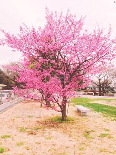 ピンクの花と草と木の写真・画像素材[1398821]