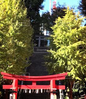愛宕神社の写真・画像素材[1636584]