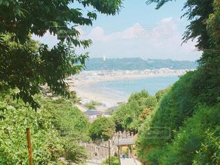 由比ヶ浜ビーチの写真・画像素材[1600594]