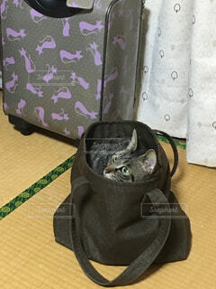 スーツケースの上に横になっている猫の写真・画像素材[1600507]
