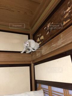高いところから降りられない猫の写真・画像素材[1600516]