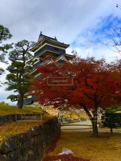 松本城と紅葉の写真・画像素材[1642358]