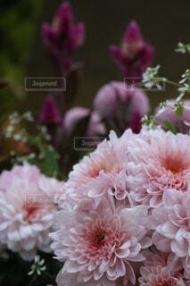 可憐な花の写真・画像素材[1603881]