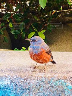 鳥の写真・画像素材[1614430]