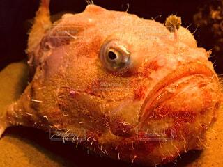魚のアップの写真・画像素材[1638196]
