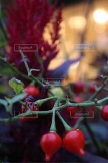 植物の写真・画像素材[1671769]