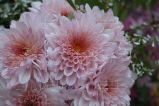 花の写真・画像素材[1671770]