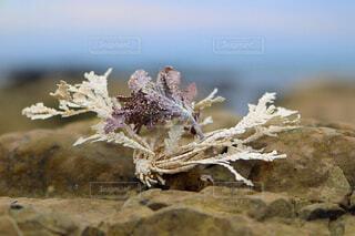 海藻の写真・画像素材[1671951]