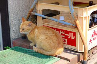テーブルの上に座っている猫の写真・画像素材[2181458]
