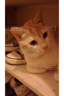 靴箱でくつろぐ猫の写真・画像素材[1607088]