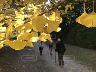 ハートの切り抜きの写真・画像素材[1609583]