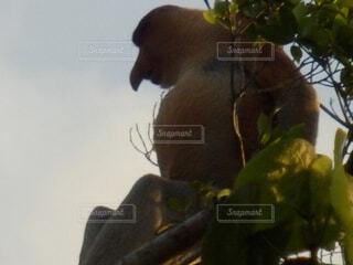枝の上に座って猿の写真・画像素材[1602037]