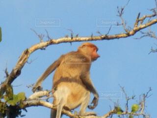 枝の上に座って猿の写真・画像素材[1602063]