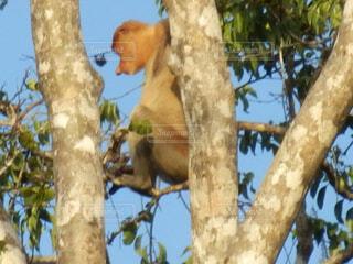 枝の上に座って鳥の写真・画像素材[1602064]