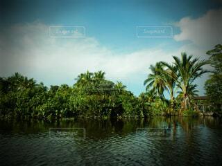 ジャングルの写真・画像素材[1602073]