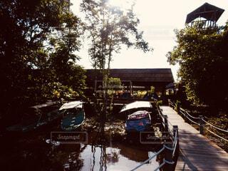 ジャングルの写真・画像素材[1602154]