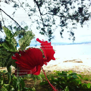 植物の赤い花の写真・画像素材[1602807]