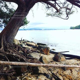 波打ち際横にあるツリーの写真・画像素材[1602810]