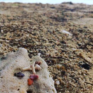 ビーチの写真・画像素材[1602813]