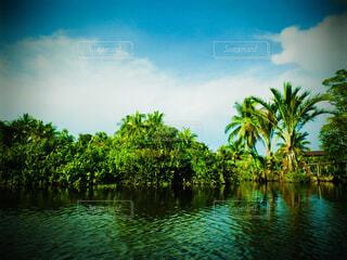 木々 に囲まれた水の体の写真・画像素材[1616552]