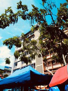 青い傘でヤシの木のグループの写真・画像素材[1635156]