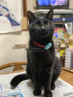 テーブルの上に座って黒猫の写真・画像素材[1609750]