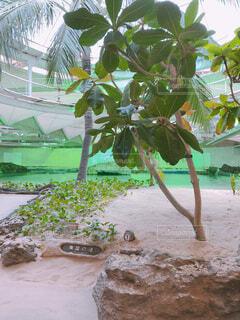 ヤシの木とビーチの写真・画像素材[1602479]
