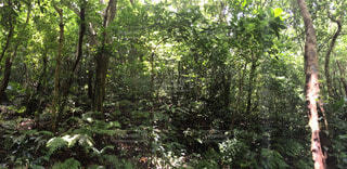 自然の写真・画像素材[54383]