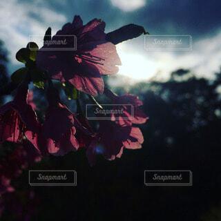 花の写真・画像素材[54389]