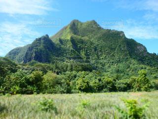 タヒチ モーレア島の写真・画像素材[1605896]