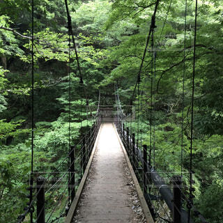 森の川に架かる橋の写真・画像素材[1606371]