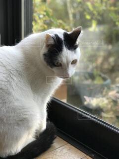 窓の前に座っている猫の写真・画像素材[1672758]