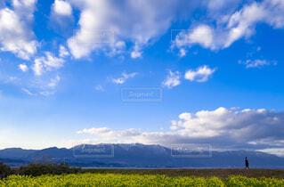 琵琶湖の菜の花の写真・画像素材[1776700]