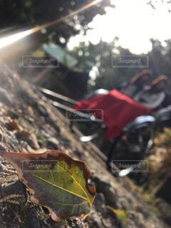 秋のはじまりの写真・画像素材[1606182]