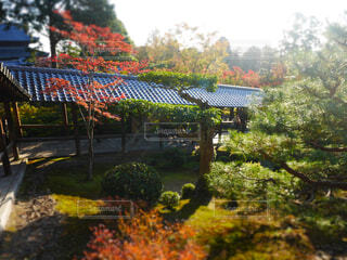 東福寺の紅葉の写真・画像素材[1606858]