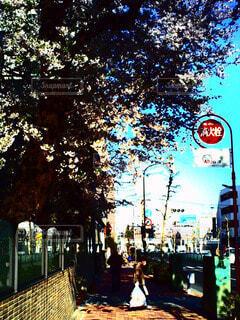 春 - No.76881