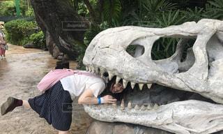恐竜の化石に食べられる女性の写真・画像素材[1608572]