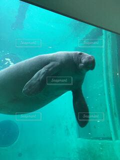水族館の写真・画像素材[1608940]