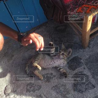 地面に横になっている猫のふれあい人の写真・画像素材[1613606]