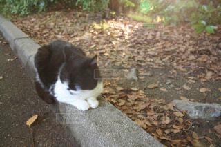 地面に座っている猫の写真・画像素材[2964779]