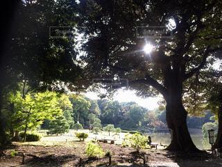 森を抜けて湖への写真・画像素材[1607879]