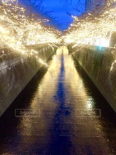 目黒川のライトアップの写真・画像素材[1608693]