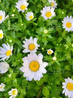 春ですね!の写真・画像素材[1865025]