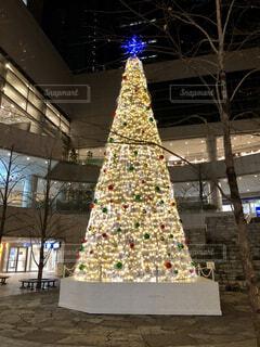 クリスマスツリーの写真・画像素材[3981695]