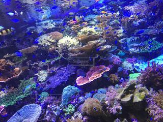 サンゴの水中ビューの写真・画像素材[1609660]